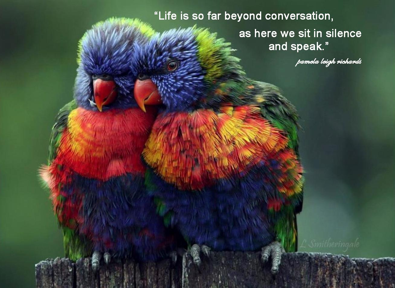 Parrots quote #1