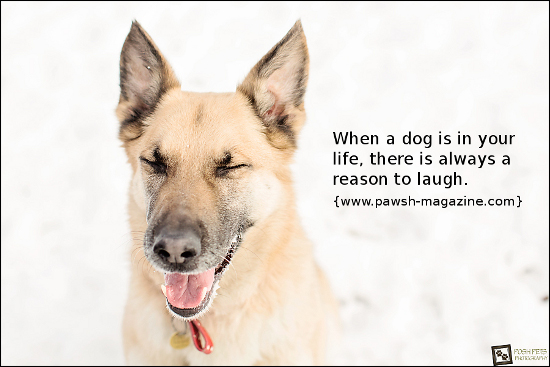 Pets quote #1