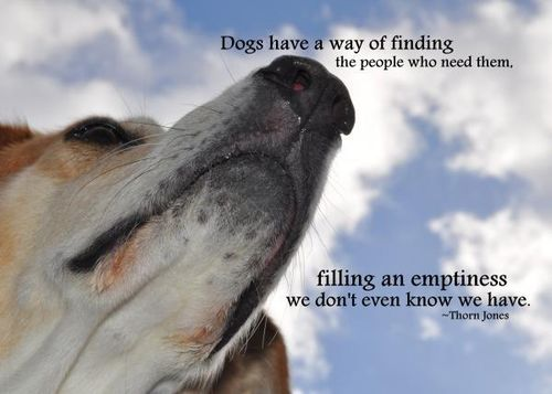Pets quote #3