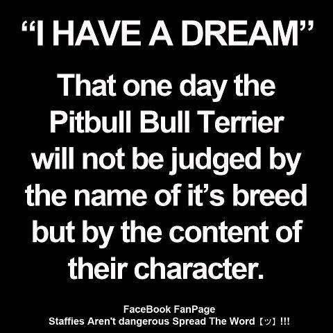 Pitbull's quote #1