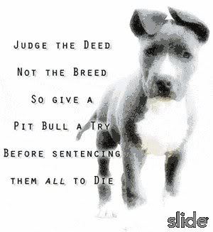 Pitbull's quote #6