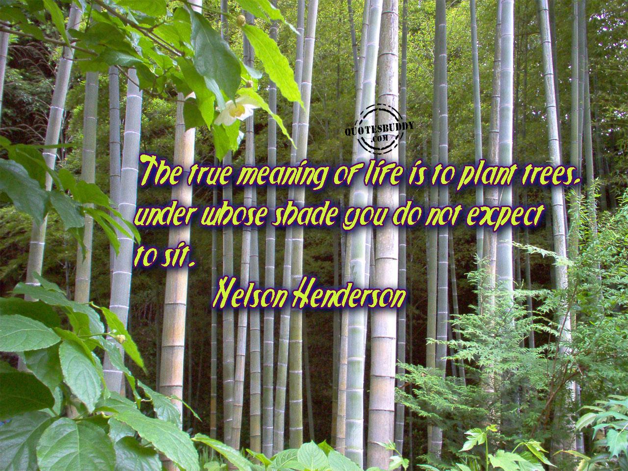 Plant quote #4