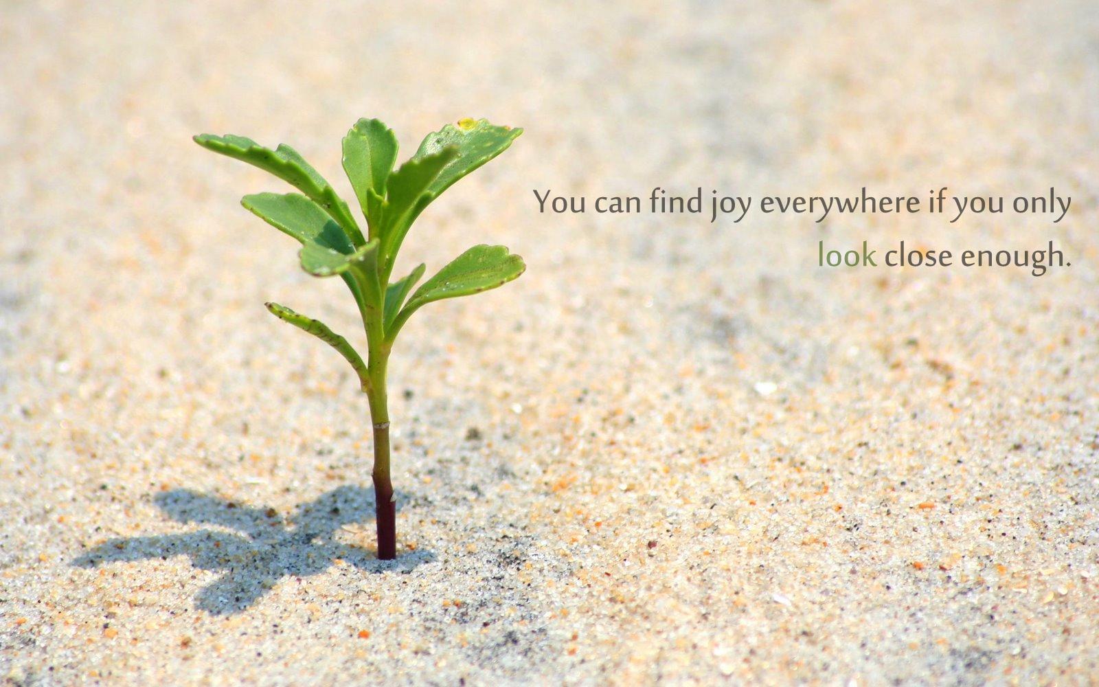 Plant quote #7