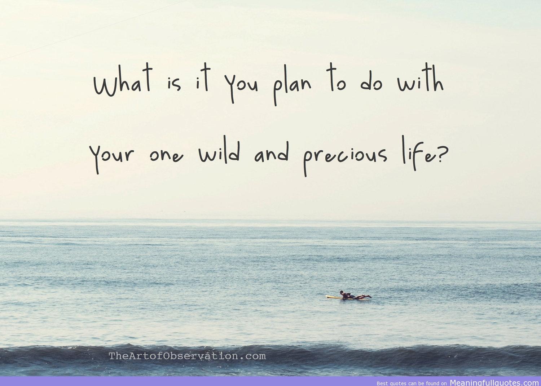 Life Is Precious Quotes Precious Life Image Quotation 7  Sualci Quotes