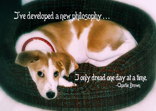 Puppy quote #2