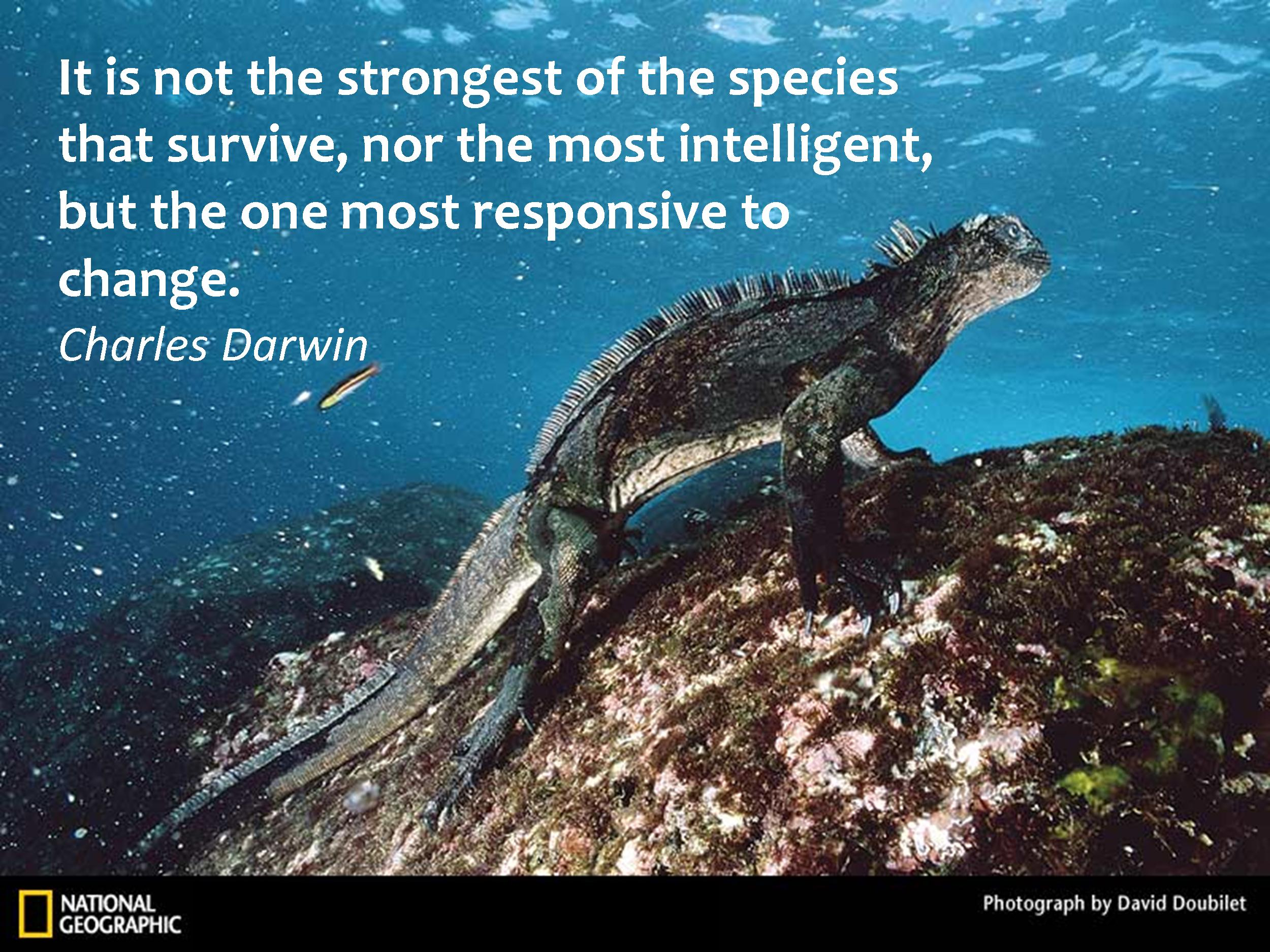 Resilience quote #2