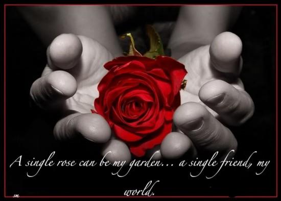 Roses quote #2