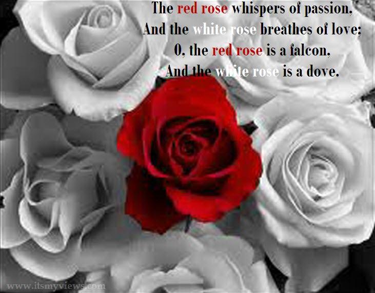 Roses quote #5