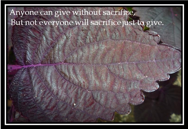 Sacrifices quote #3