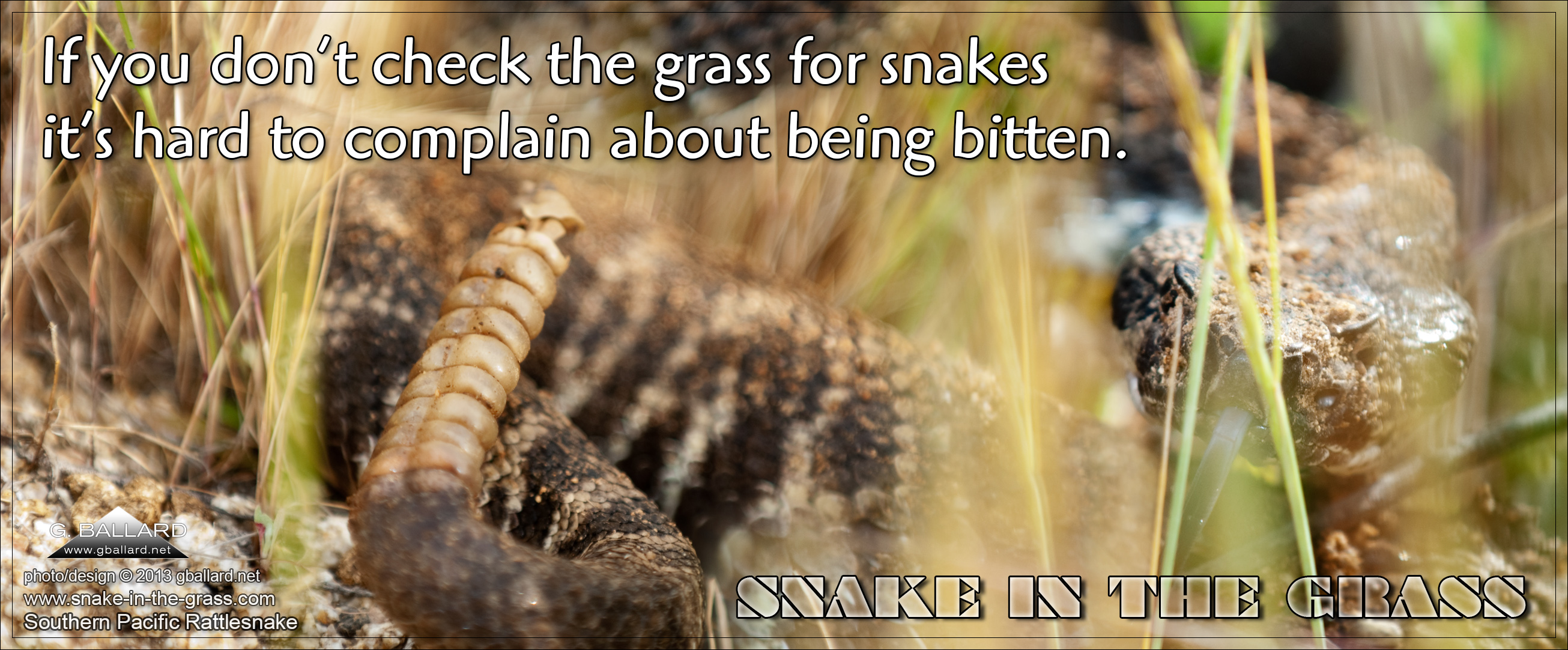 Snake quote #3