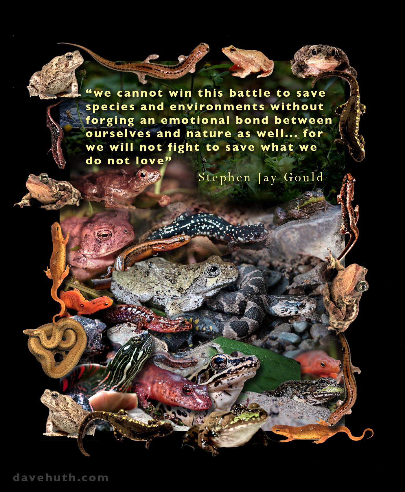 Species quote #6