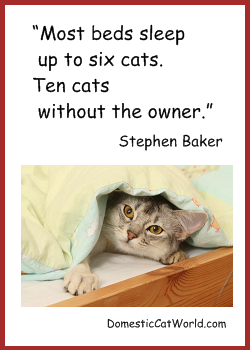 Stephen Baker's quote #6