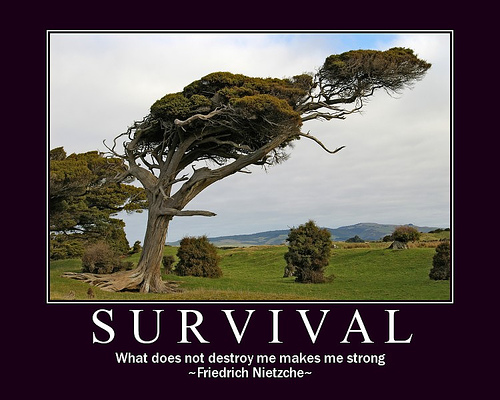 Survival quote #2