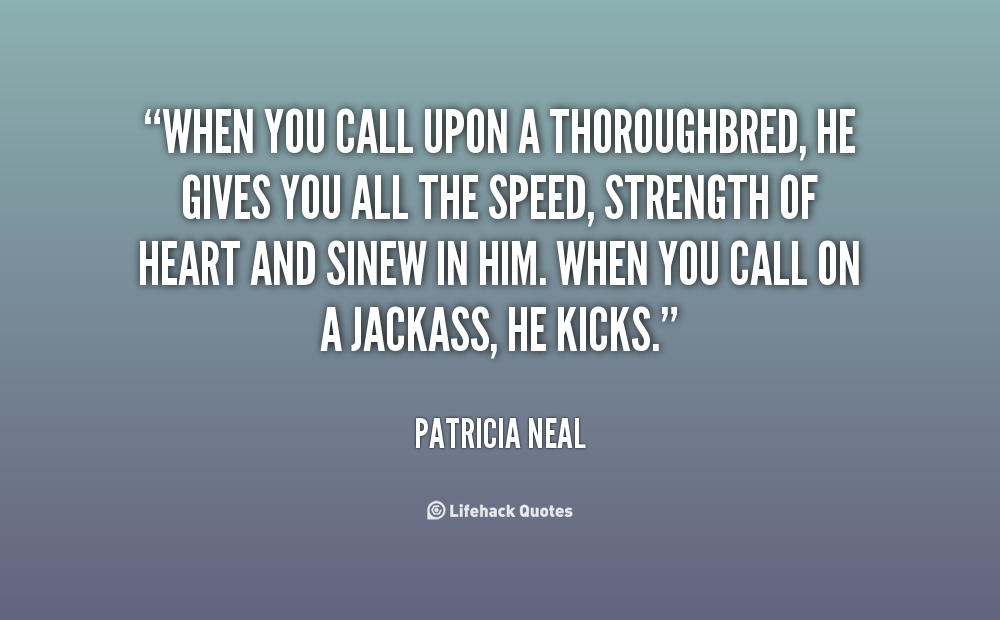 Thoroughbred quote #2