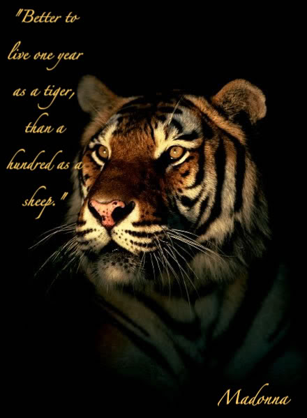 Tiger quote #4
