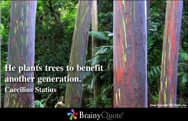 Trees quote #3