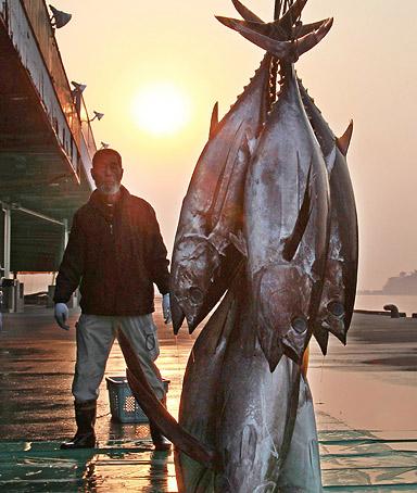 Tuna quote #1