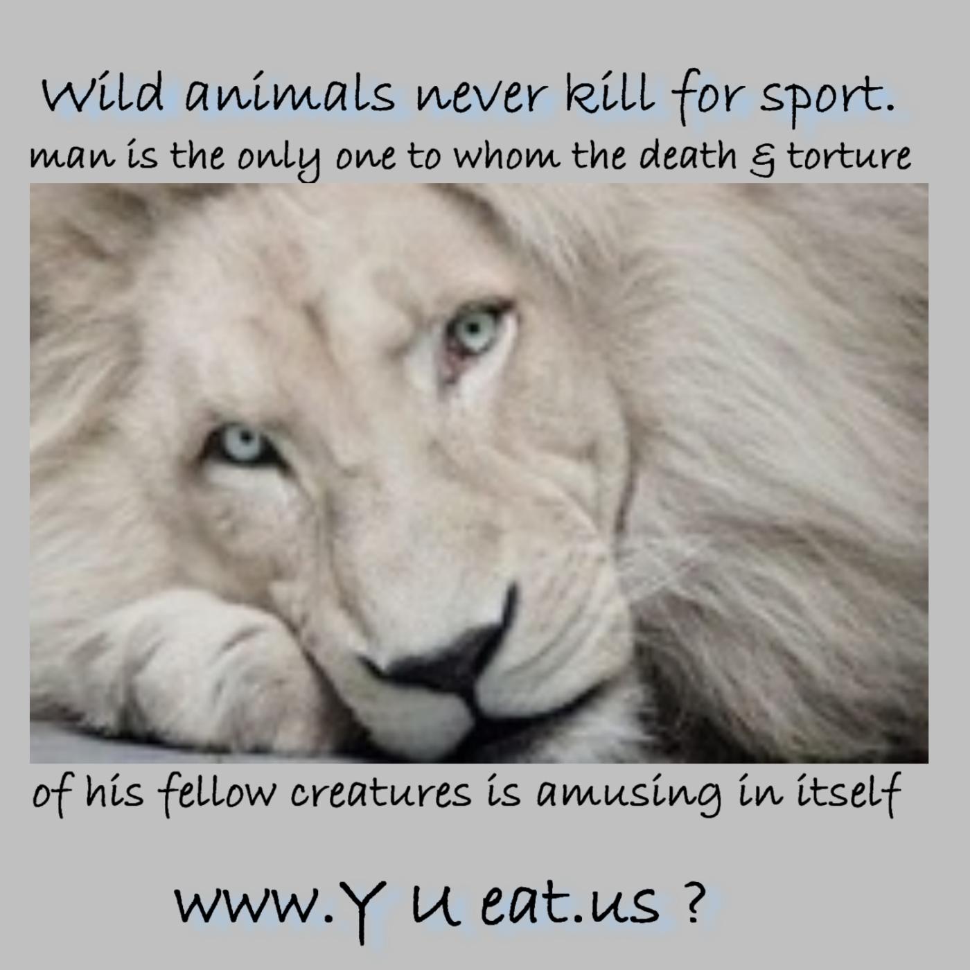 Wild Animal quote #2