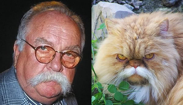 Wilford Brimley's quote #7