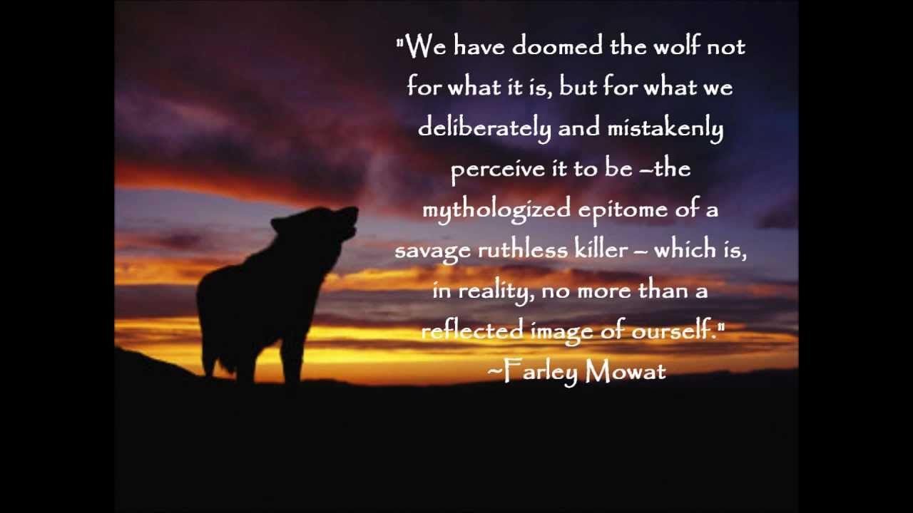 Wolf quote #5