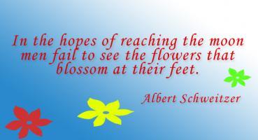 Albert Schweitzer's quote