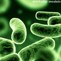 Bacteria quote #2