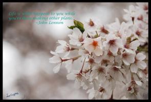 Blossom quote #1