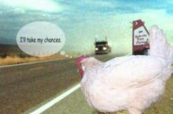 Chickens quote #5