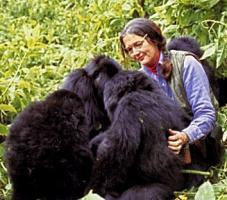Dian Fossey's quote