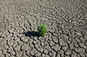 Droughts quote #2