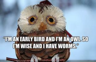 Early Bird quote #2
