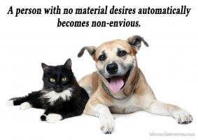 Envious quote #1