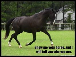 Horses quote