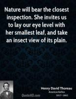 Insect quote #1