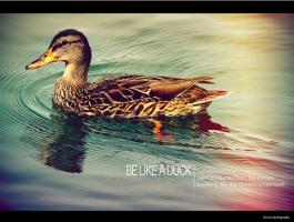 Like A Duck quote #2