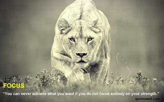 Lions quote #1
