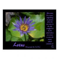 Lotus quote #1