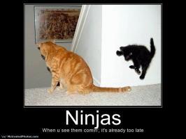 Ninja quote #1