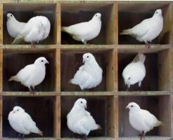 Pigeonhole quote
