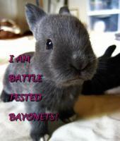 Rabbits quote #2