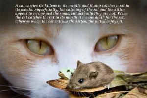 Rat quote #6