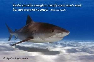 Shark quote #1
