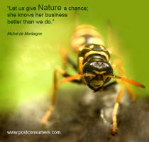 Wasp quote #1