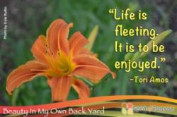 Yard quote #1