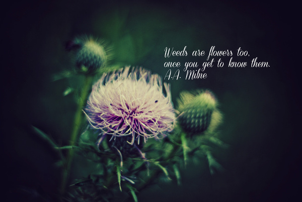 A. A. Milne's quote #1