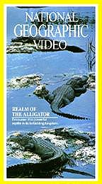 Alligator quote #1