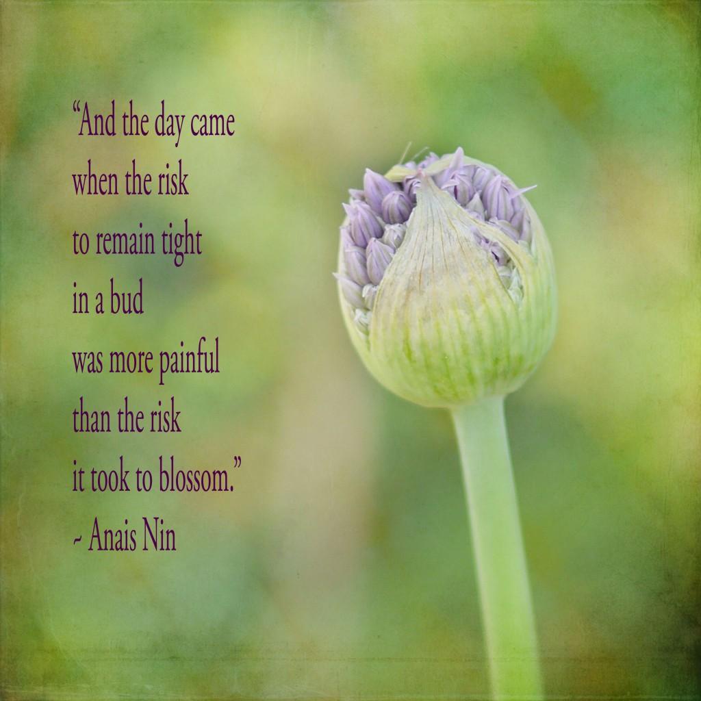 Anais Nin's quote #7
