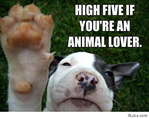 Famous Quotes About Animal Lover Sualci Quotes
