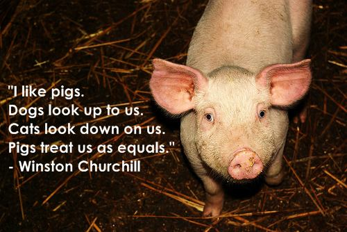 Animalistic quote #2