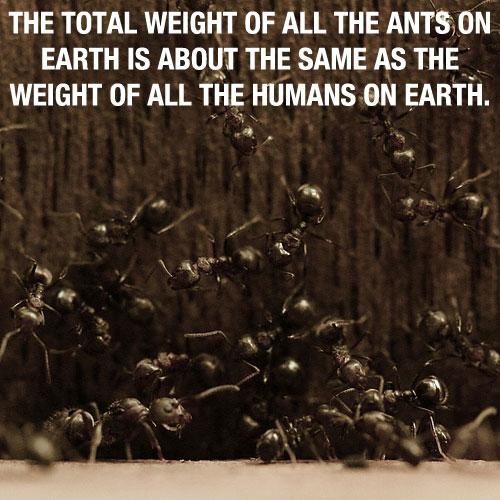Ants quote #1